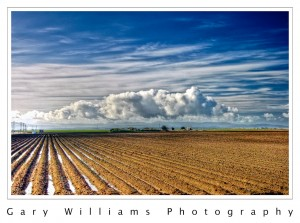 Photograph of fields wet from rain near Castroville, California