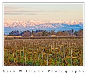 Photograph of a grape vineyard and the Sierra Nevada mountains near Fresno, California