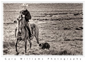 Photograph of  horse and rider and dog in southeastern Washington