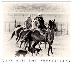 Photograph of  horses and riders and dogs in southeastern Washington