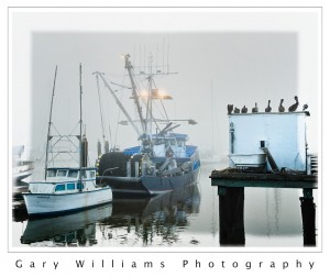 Photograph of pelicans on a dock, Moss Landing, California