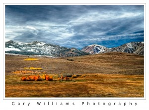 Photograph of  yellow and orange Aspen trees on Highway 395 in Mono County, California