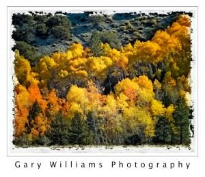 Photograph of  yellow and orange aspen trees along June Lake in Mono County, California
