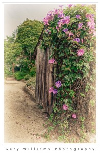 Photograph of a gate and path at a garden in Monterey, California