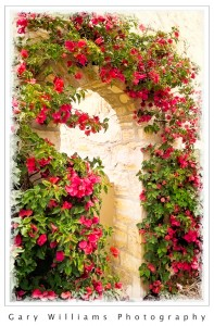 Photograph of an archway covered with bougainvillea in Monterey, California