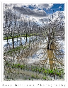 Photograph of a flooded orchard in Watsonville, California