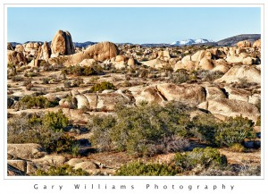 Photograph of Jumbo Rocks in the Joshua Tree National Park