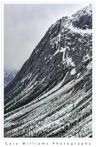 Photograph of a snow and tree covered peak from the Icefields Parkway, Canada