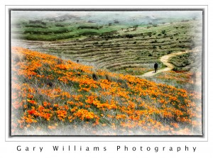 Photograph of the Poppy Preserve in Antelope Valley, blended with a background texture applied