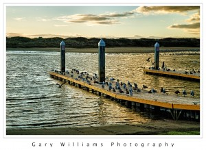 Photograph of sea gulls on a boat launch ramp in Moss Landing Harbor