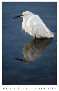 Photograph of an egret standing in Moss Landing Harbor