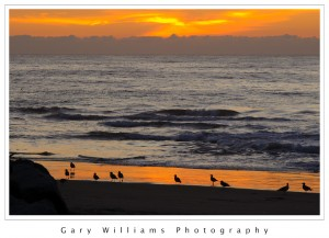 Photograph of birds on a beach at sunset at Moss Landing Harbor