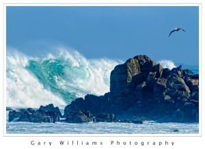 Photograph of a large wave and pelican at Asilomar, California