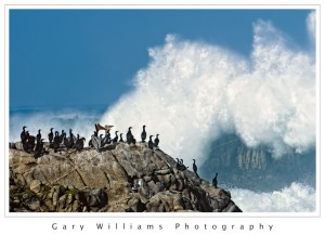 Photograph of a group of birds watching a large wave at Asilomar, California