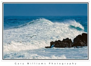 Photograph of three pelicans flying in front of a large wave at Asilomar, California