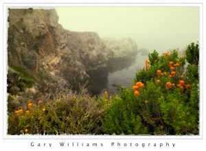 Photograph of orange flowers along the California Pacific Coast at Point Lobos
