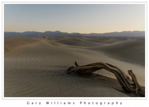 Photograph of a tree trunk and sand dune at Mesquite Flats, Death Valley National Park