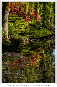 Photograph of tree reflections in a pond in the Sunken Garden at the Butchart Gardens, British Columbia, Canada