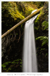 Photograph of Marymere Waterfalls in the Olympic National Park, Washington