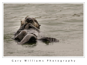 otters_04