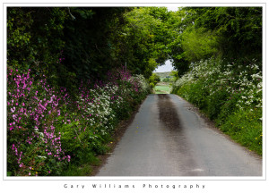 Photograph of a flower-lined road in Trenwheal, Cornwall, England