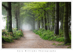 Photograph of a misty path in Tehidy Forest near Portreath, Cornwall, England