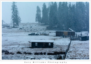 Photograph of a truck, horses and ranch buildings in a snowstorm in the Carson Forest, New Mexico