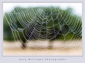 Photograph of a spiderweb covered with dew drops