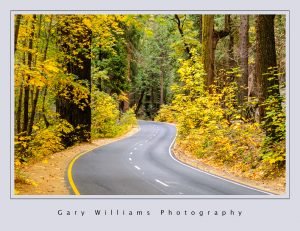 Photograph of a trees in Fall colors lining a road in Yosemite Valley