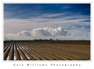 Photograph of farm land, rows and clouds near Marina, California