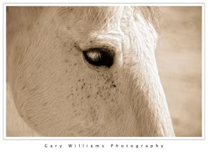 Photograph of the eye of a horse at Redwings Horse Sanctuary