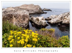 Photograph of birds on a rock at Point Lobos, California.