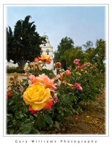 Photograph of roses at the San Juan Bautista Mission