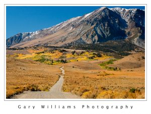 Photograph of a dirt road leading into colorful trees near June Lake in the eastern Sierra Nevada mountains.
