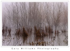 Photograph of wetland grasses near Portland, Oregon