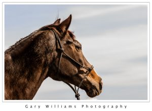 Photograph of a brown horse