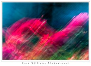 Photograph of intentionally blurred flowers