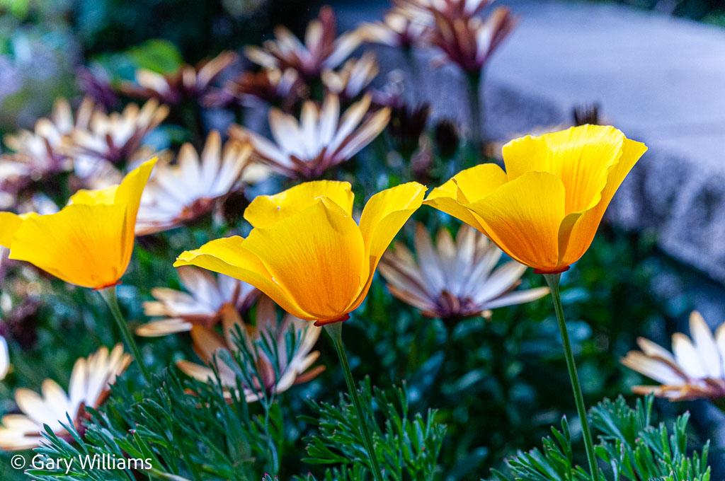 GWilliams_2012_04_09_0681.jpg