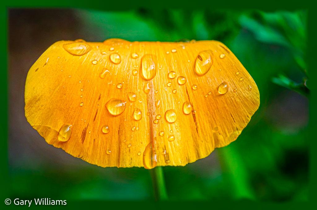 Poppies_Sample-116-of-128.jpg