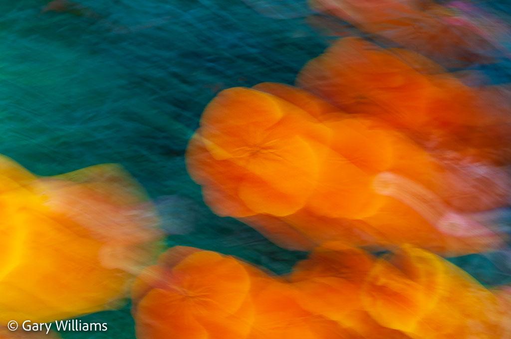 Poppies_Sample-128-of-128.jpg