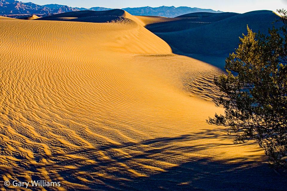 Dune-Study-5.jpg