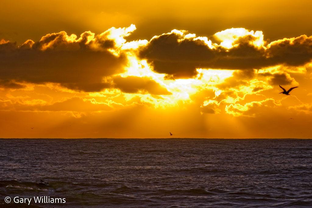 Moss-Landing-Sunset-and-Pelican-1-of-1.jpg