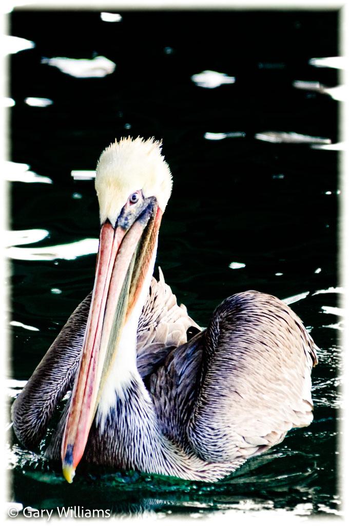 Otters_20081202_0520-Edit.jpg