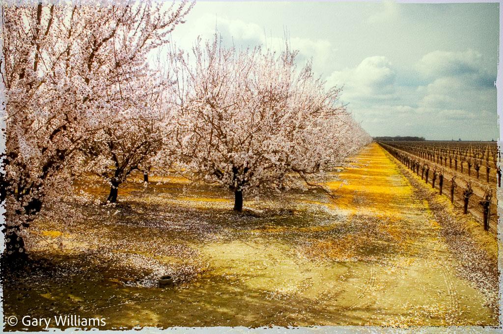 Easton-Orchard-1-copy.jpg