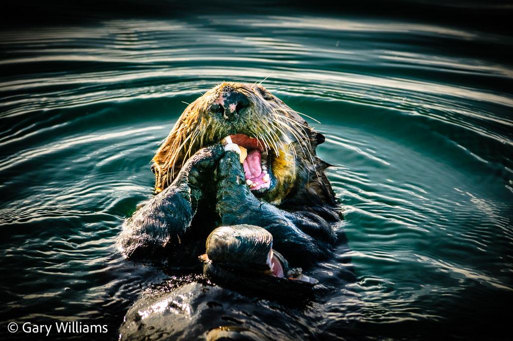 Otters_20081202_0423.jpg