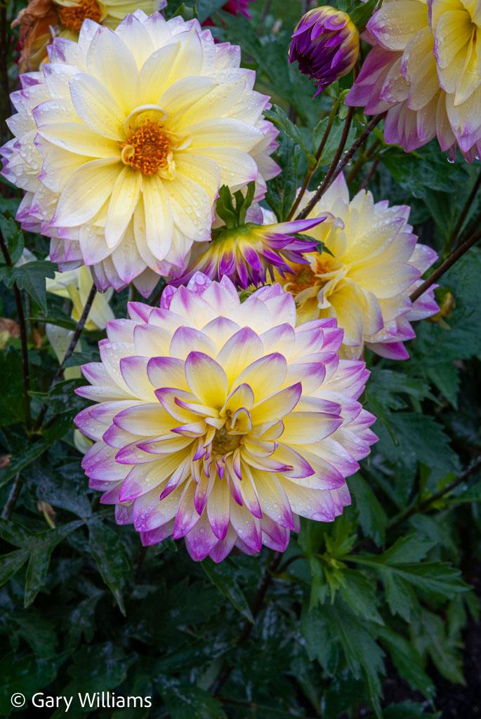 Tacoma_20081016_3702.jpg